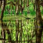 poza Oferă-i un plus de aventură vacanței tale printr-o vizită în Rezervația Naturală Baltata