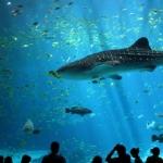 poza Bucurați-vă de o experiență memorabilă în cadrul acvariului din Istanbul