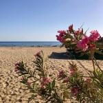 poza Patara Beach - un mic colț de paradis din apropiere de  Fethiye